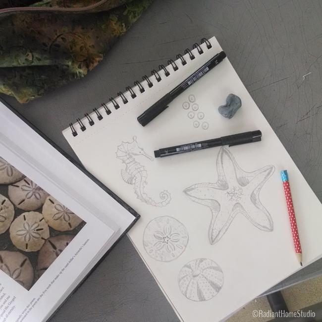Seahorse Sketch | MIID Summer School | Radiant Home Studio