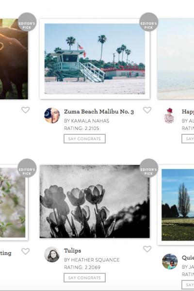 Minted Photo Challenge Winners | Radiant Home Studio